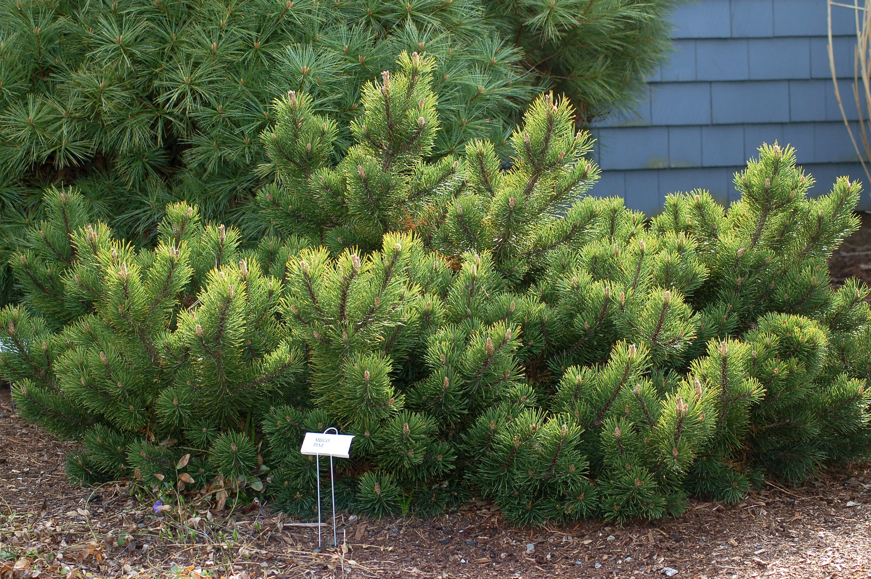 Drought-Tolerant Trees: Examples for Your Landscaping