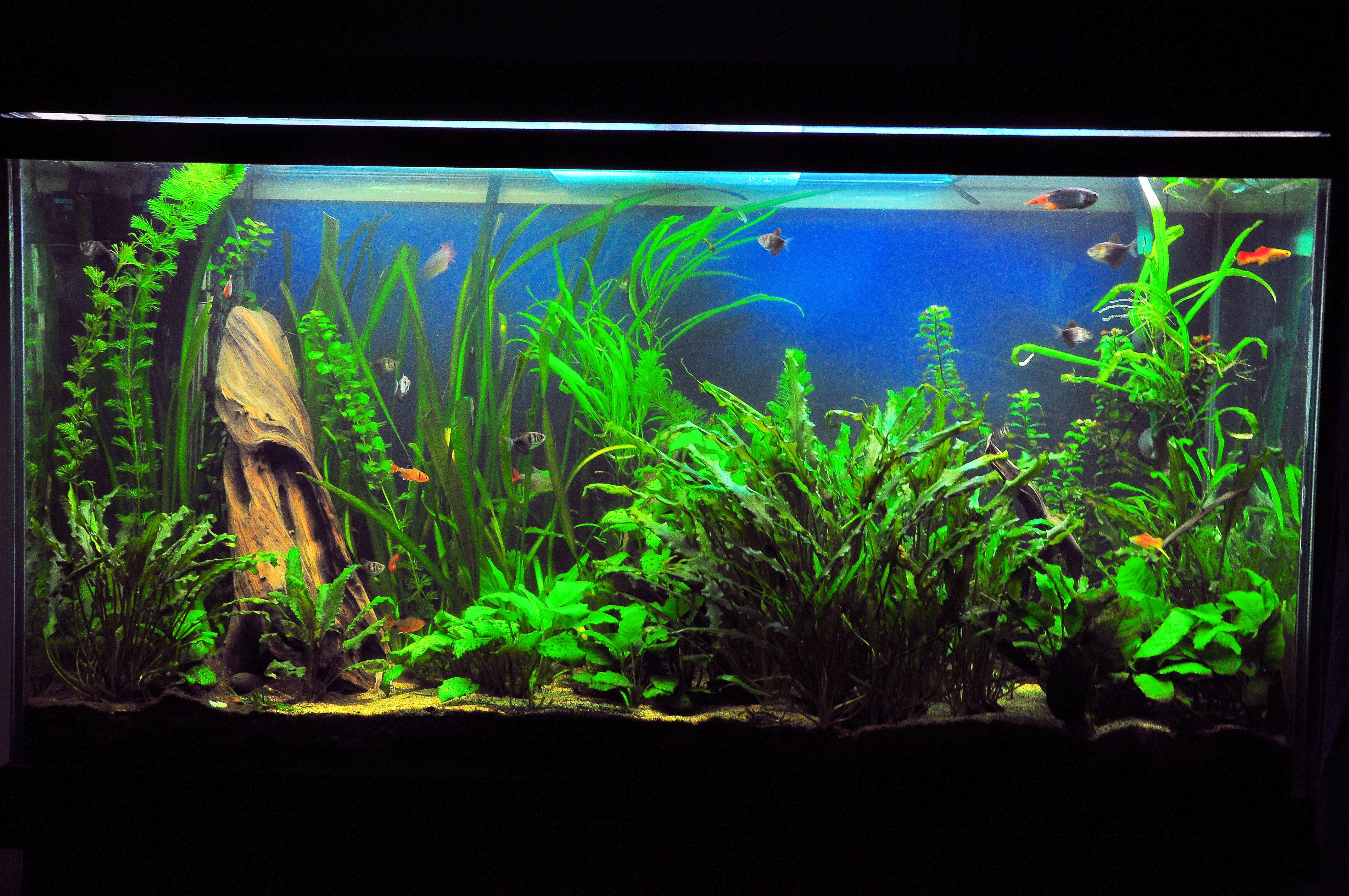 The preferred tank levels for community fish species for Small freshwater aquarium fish