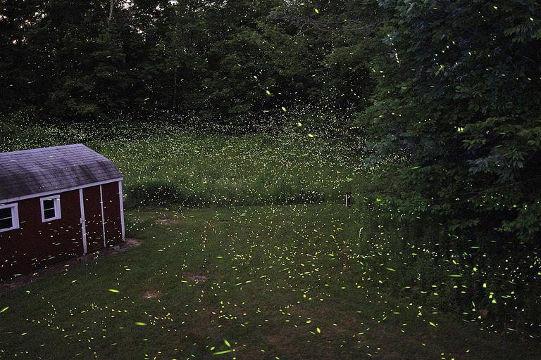 Fireflies flashing at dusk.