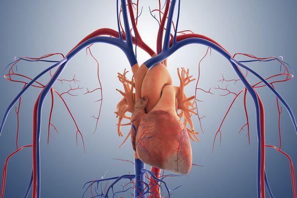 Heart disease is the No. 1 killer in America.