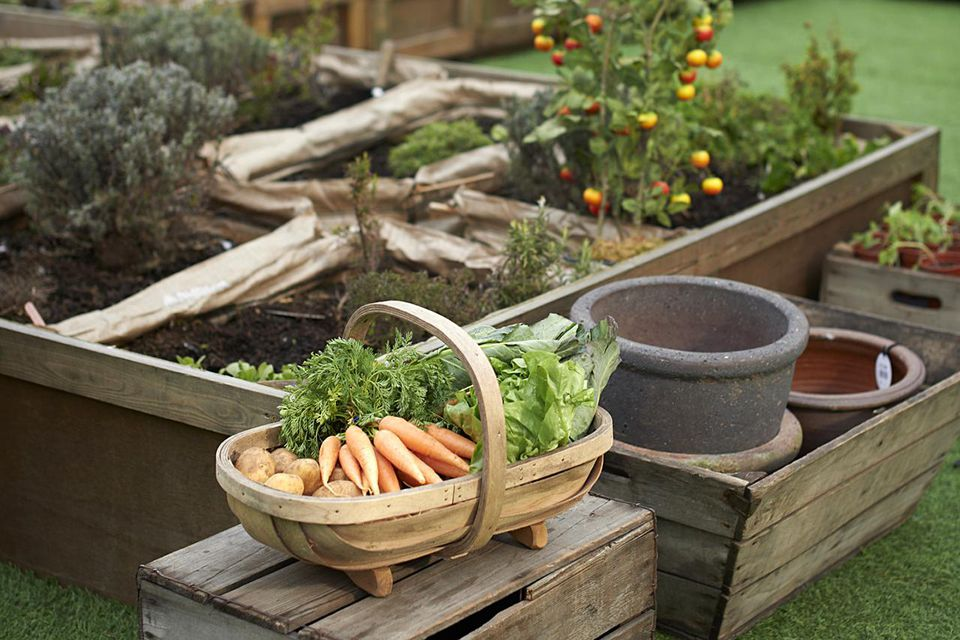 Assorted fresh vegetables in a wooden basket in urban allotment on roof garden.