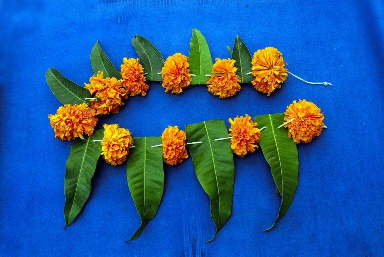 Festoon made by Marigold flowers and Mango Leaves Pune Maharashtra India Asia