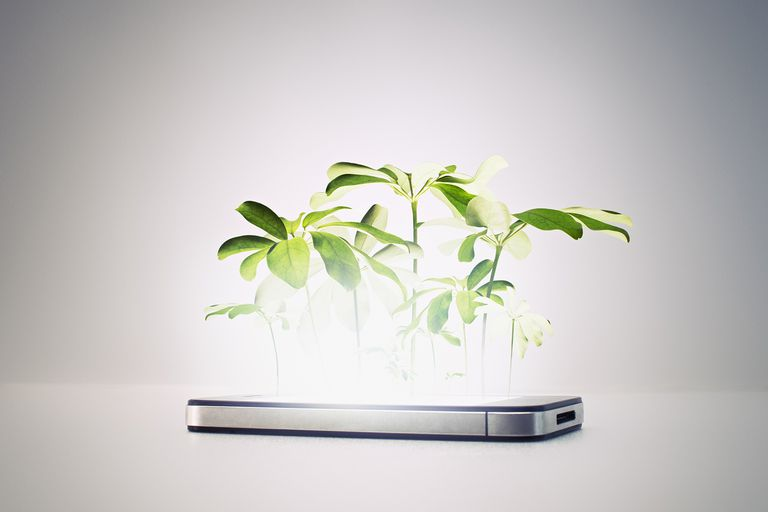 iPhone in nature