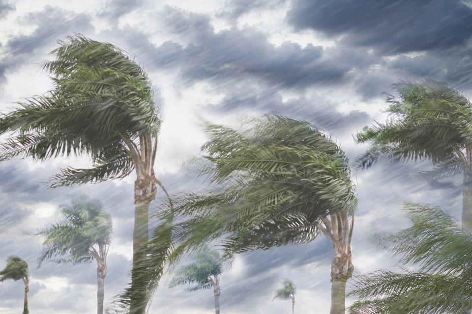 Palm trees blowing in a heavy storm.