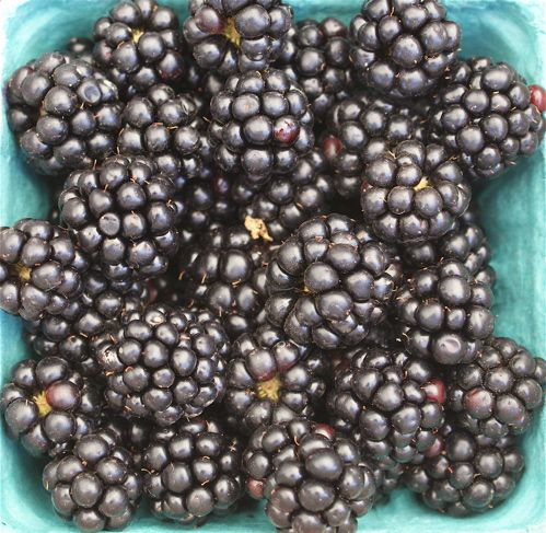 Image of Blackberries