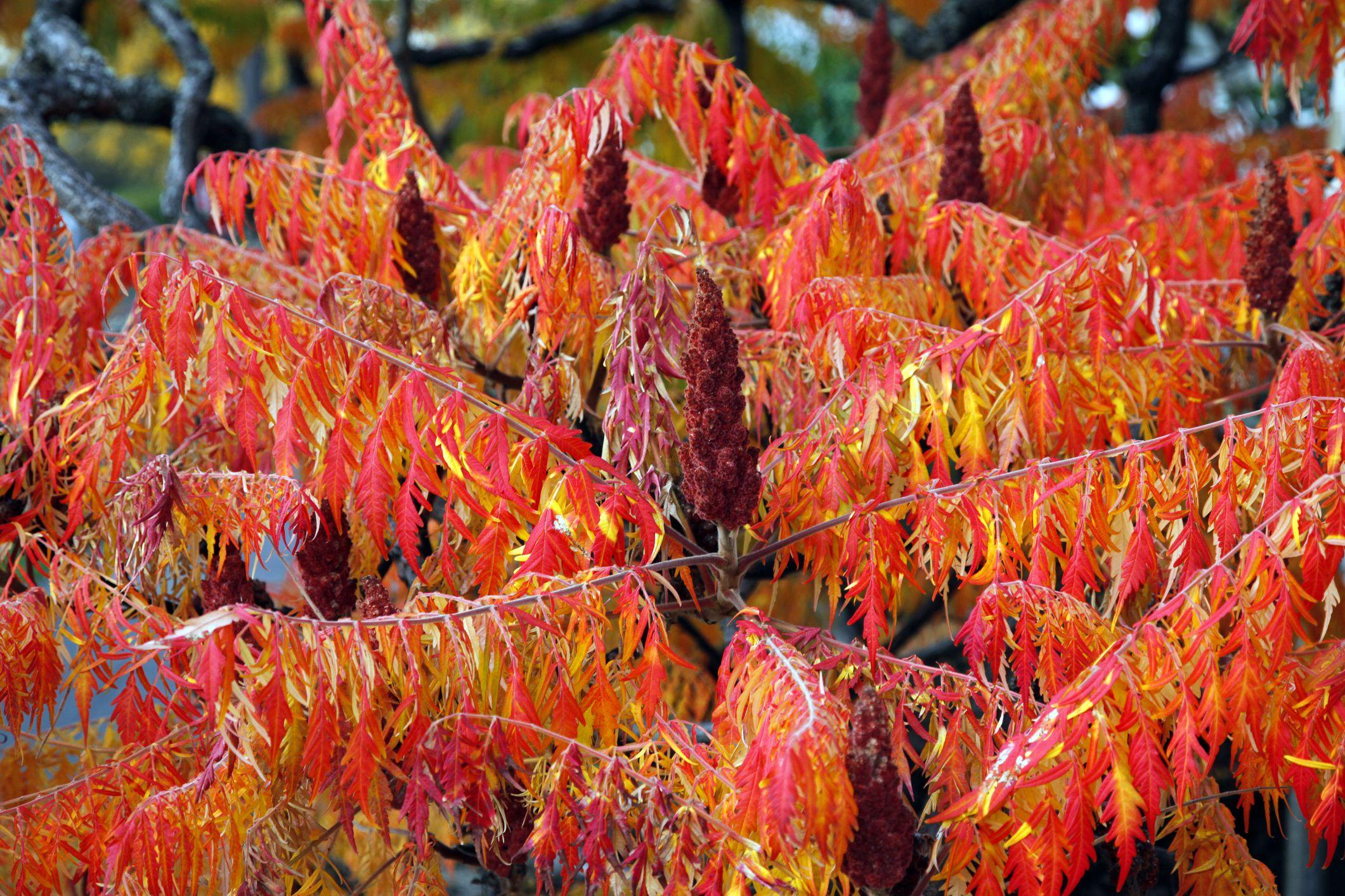 Tall Shrubs Examples Of Tree Like Bushes