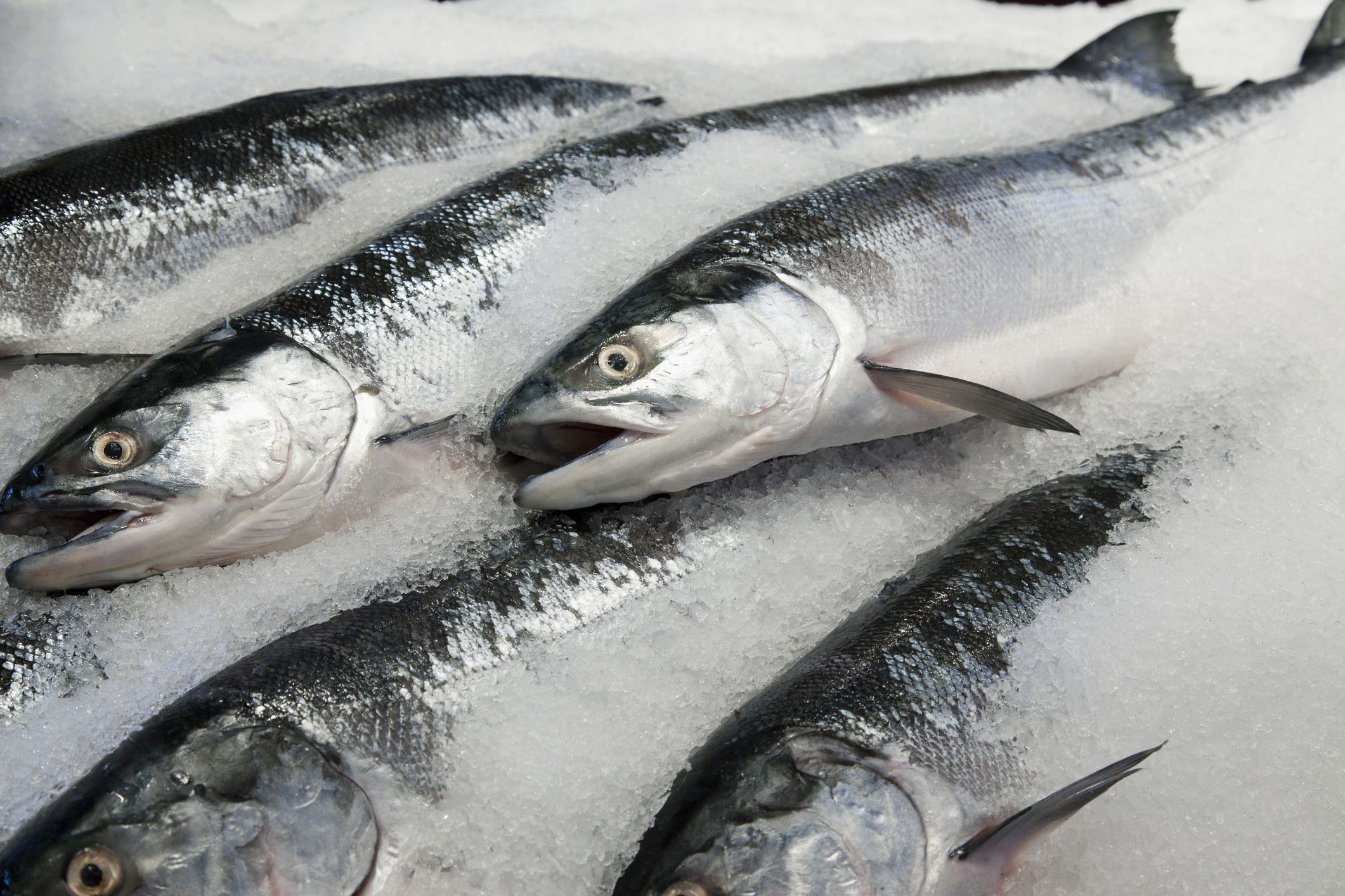 Choosing the best fresh or frozen salmon for How to fish for salmon