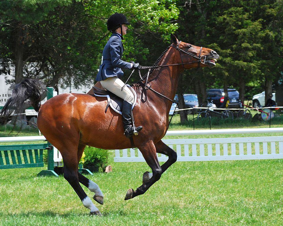 Horse loan norfolk