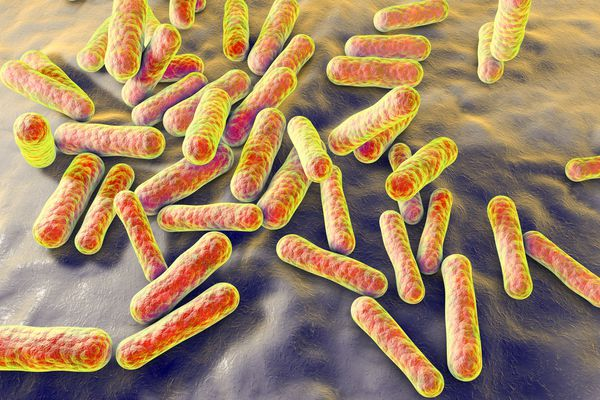An Antibiotic for MS May Help Prevent MS