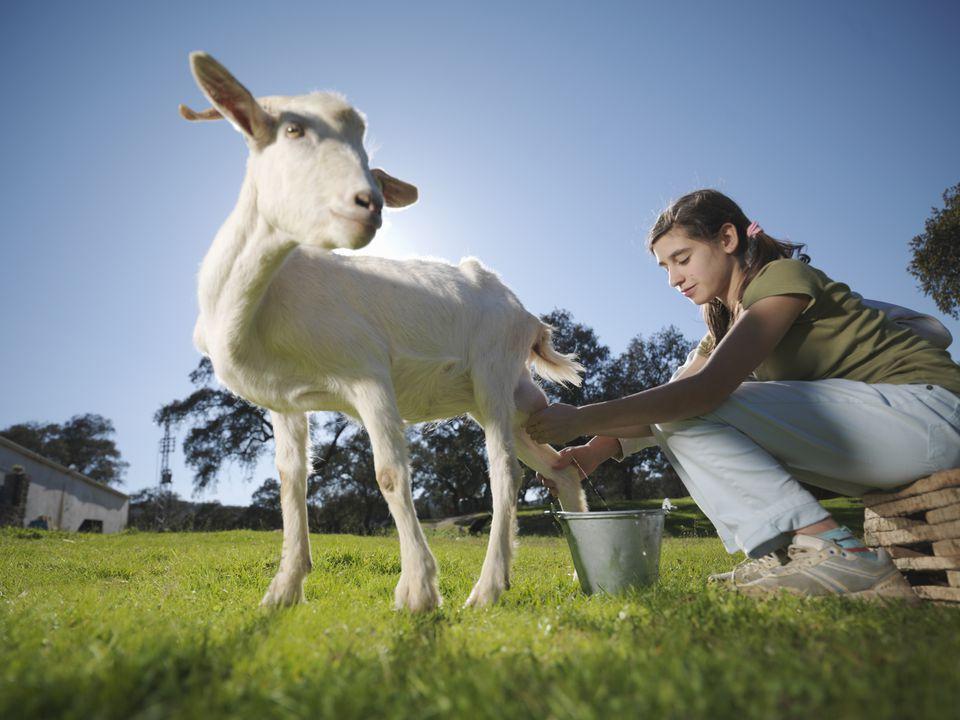 「goat milk」の画像検索結果