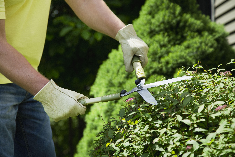 10 Landscaping Errors To Avoid