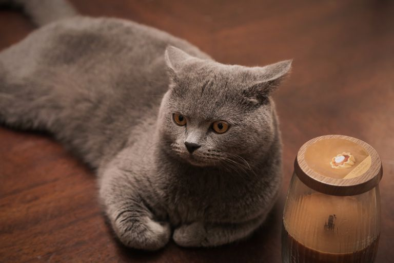 Cat and Candle