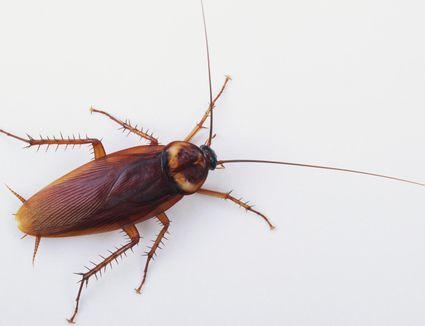 12 Critical Steps to Prepare for Cockroach Service