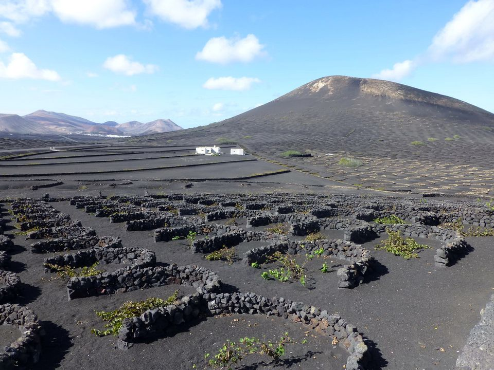 Vineyards on Lanzarote in the Canary Islands
