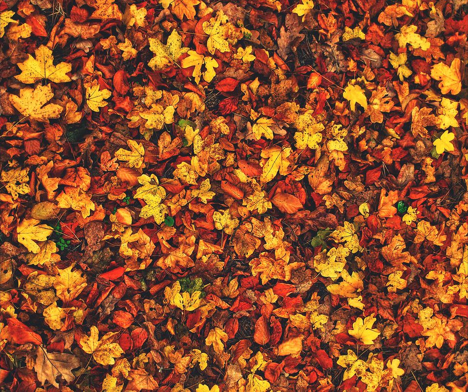 High Angle View Of Autumn Dry Leaves