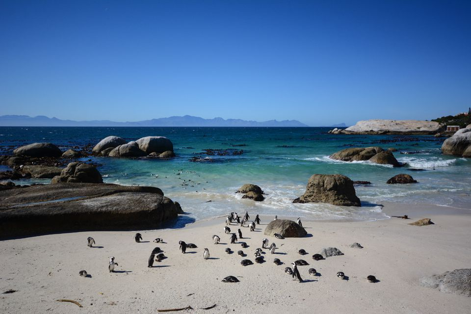 Cheap Things To Do In Cape Town For Under - 9 things to see and do in muizenberg beach