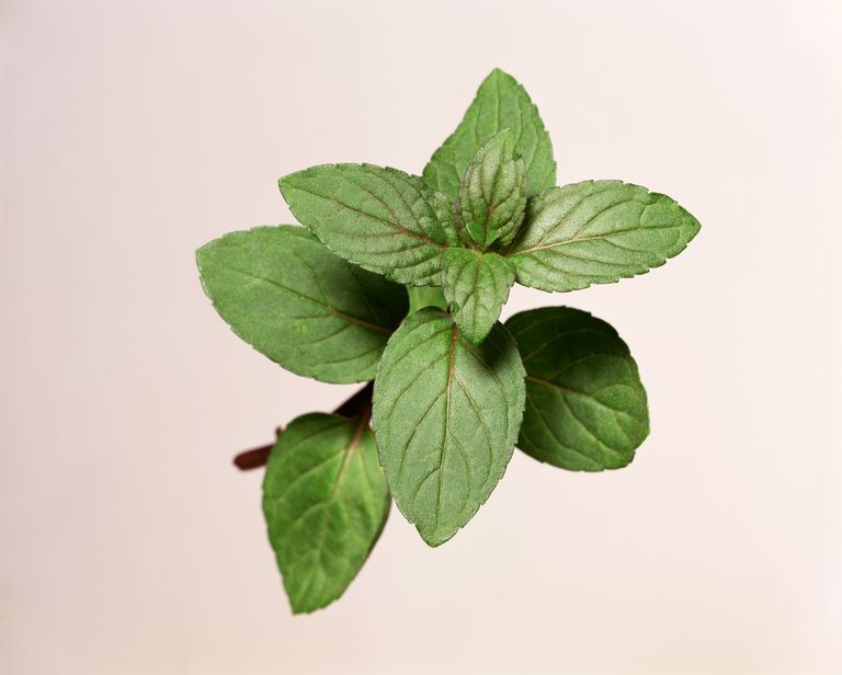 Peppermint sprig