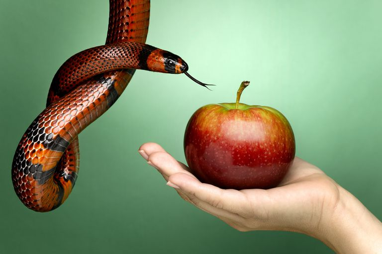 Woman's hand holding apple, with snake