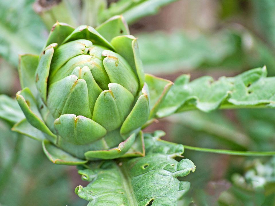 the 8 best plants for edible landscaping
