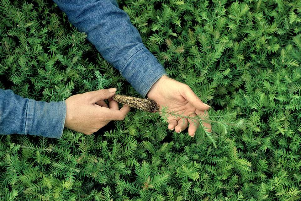 Woman holding a tree seedling.