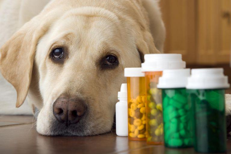Pain meds for Dogs