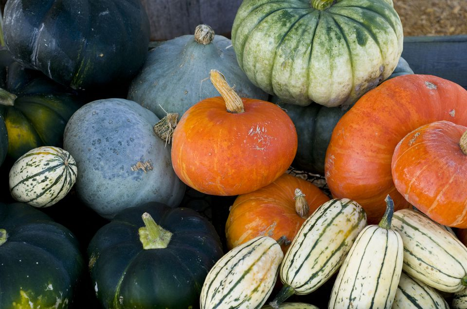 Winter Squash at Farmers Market
