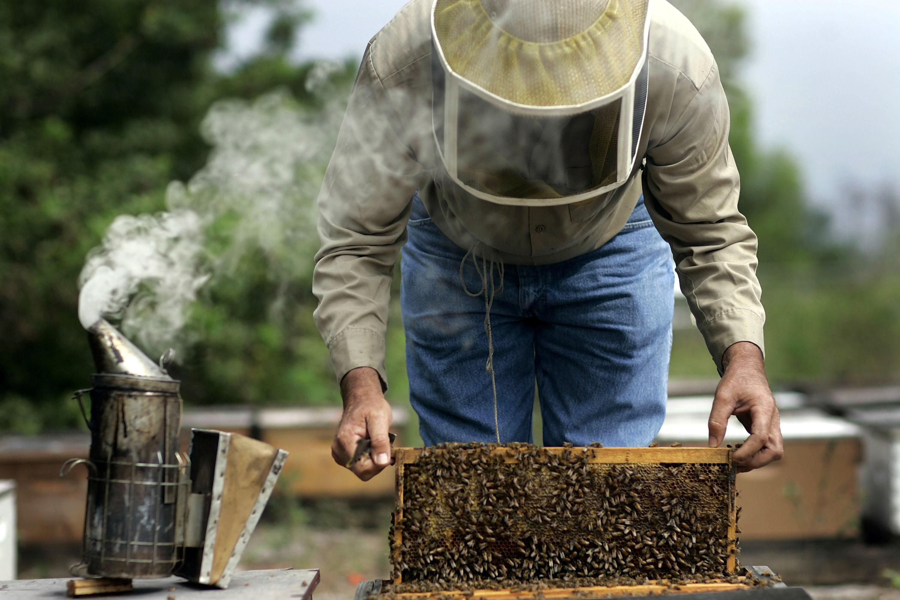 how to buy honey bees for your small farm