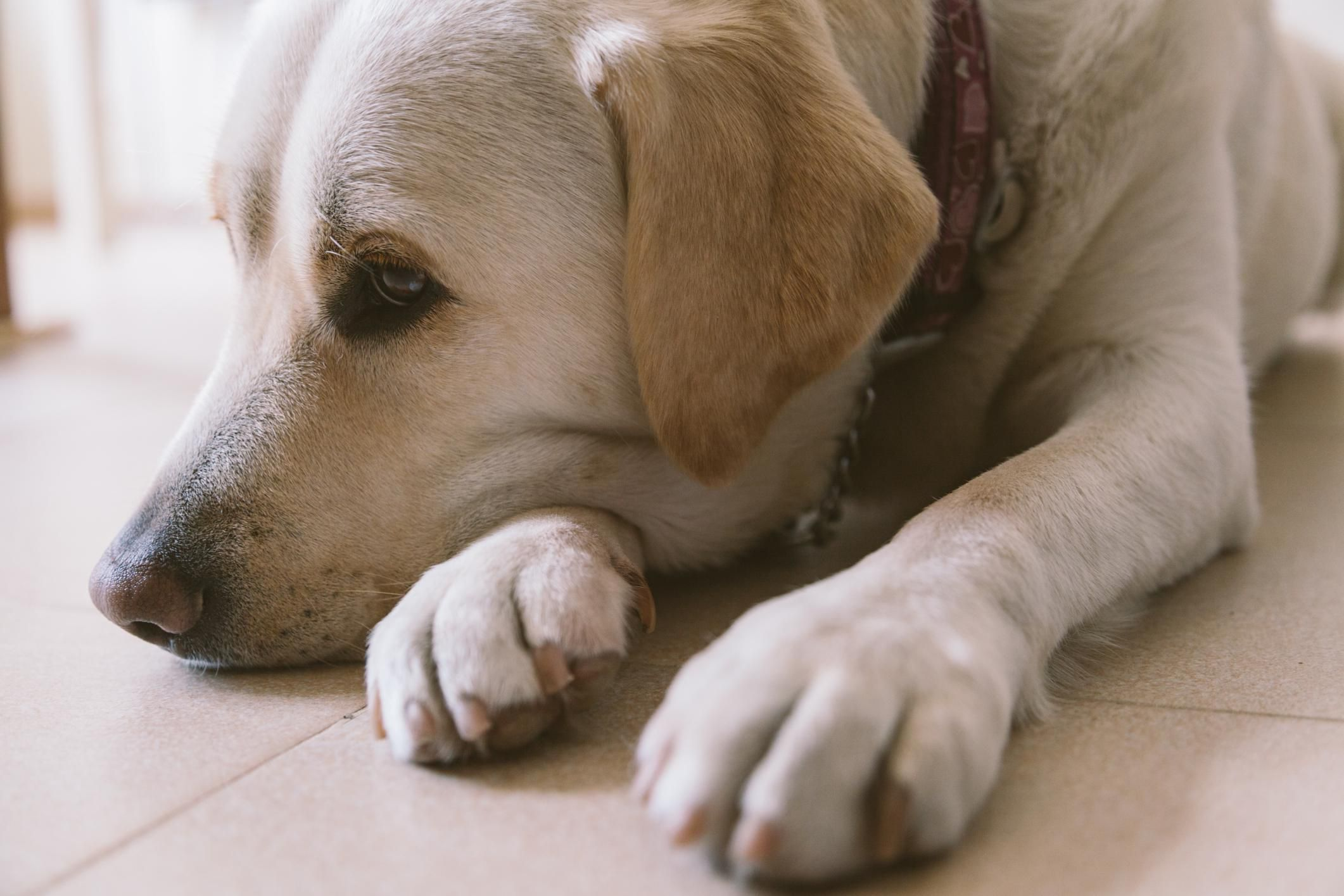 Can Dog Food Cause Seizures In Dogs