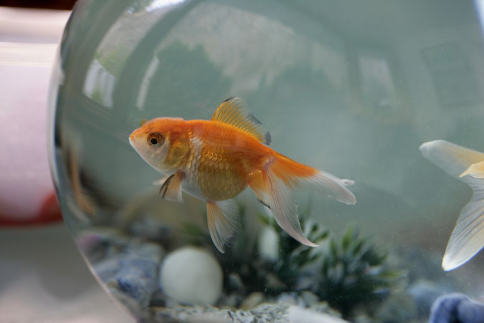 Names you can give your pet fish for Fish bowl pets