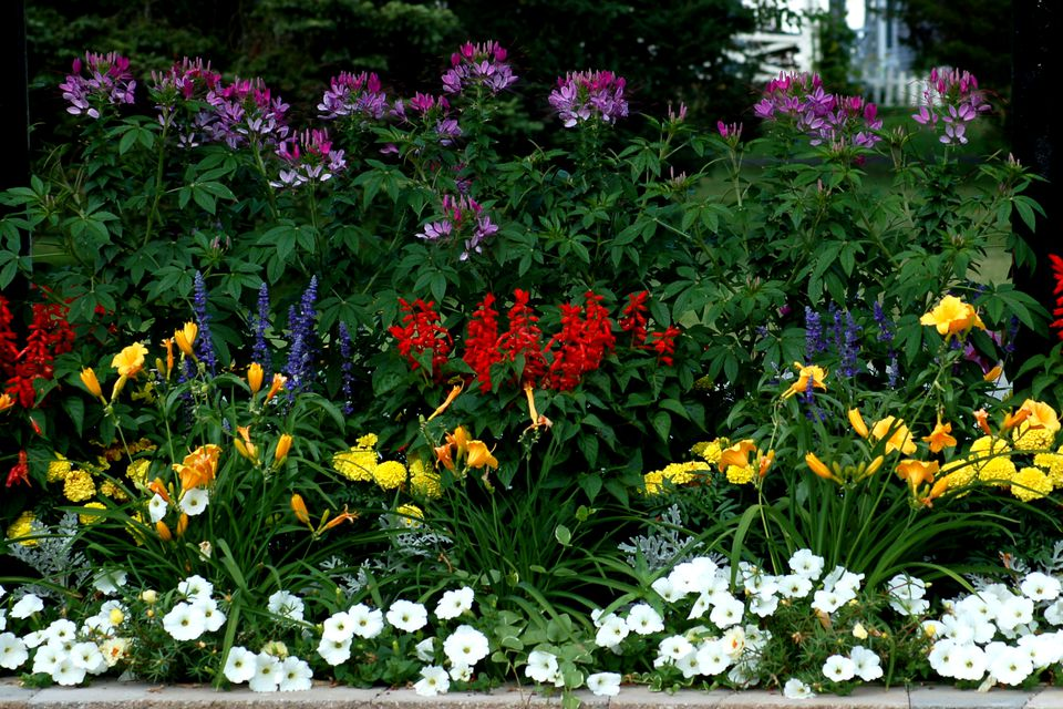 Flower borders ideas to make your landscaping sizzle - Plantas para arriates ...