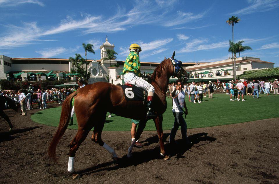 Horses Preparing to Race at Del Mar