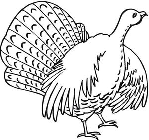 coloring book fun turkey coloring pages - Free Turkey Coloring Pages