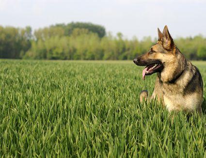 Image Result For Seizure From Dog