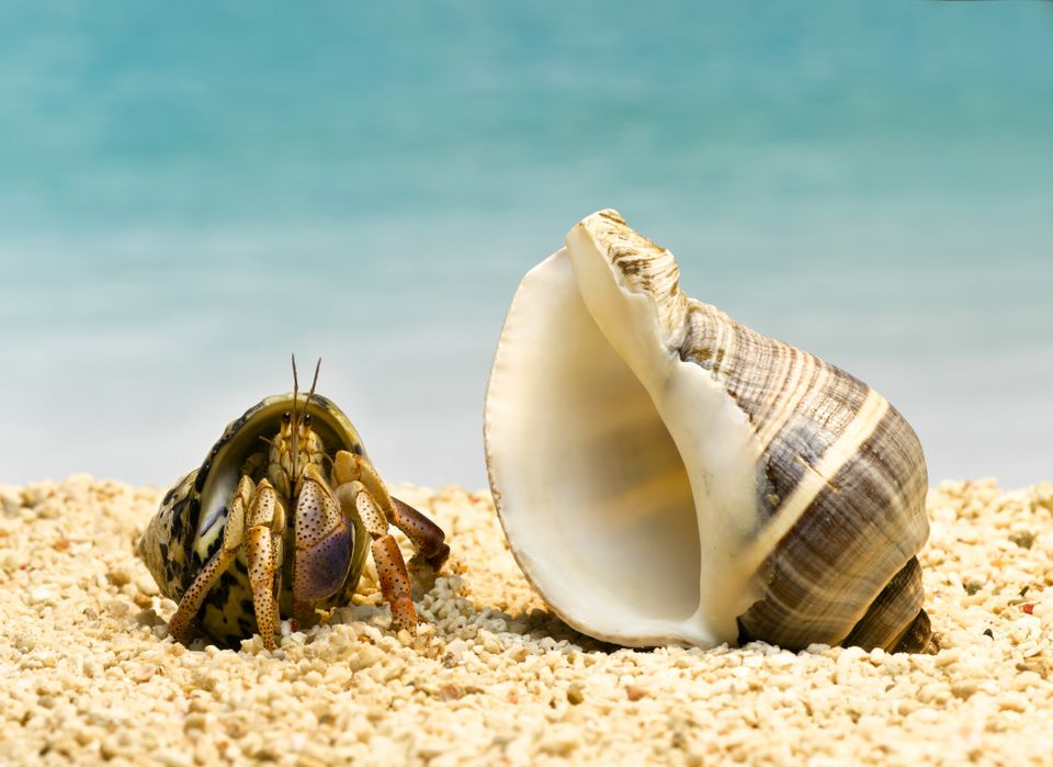 Hermit crab and shell on sand