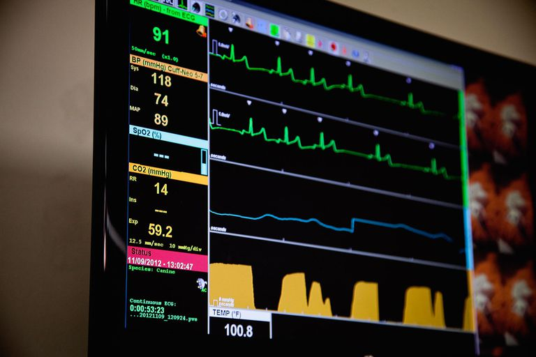 Digital panel showing vital signs at Vet clinic