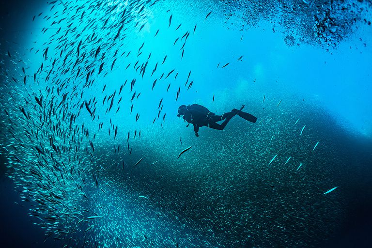 scuba diver swimming through a school of silver sides