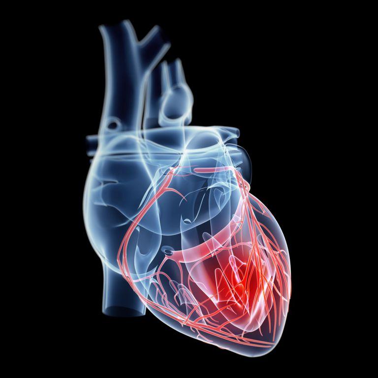 Gráfica de un corazón humano