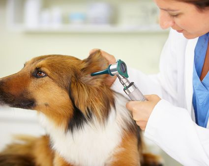 Natural Remedies For Heartworms In Cats