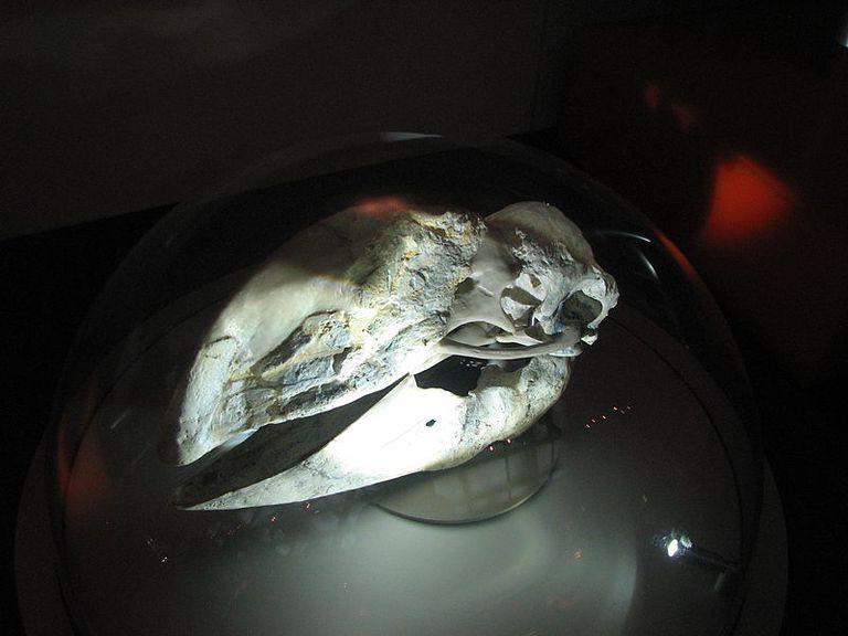 Bullockornis