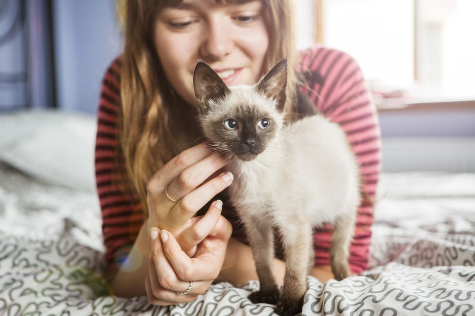 Siamese kitten and girl on bed