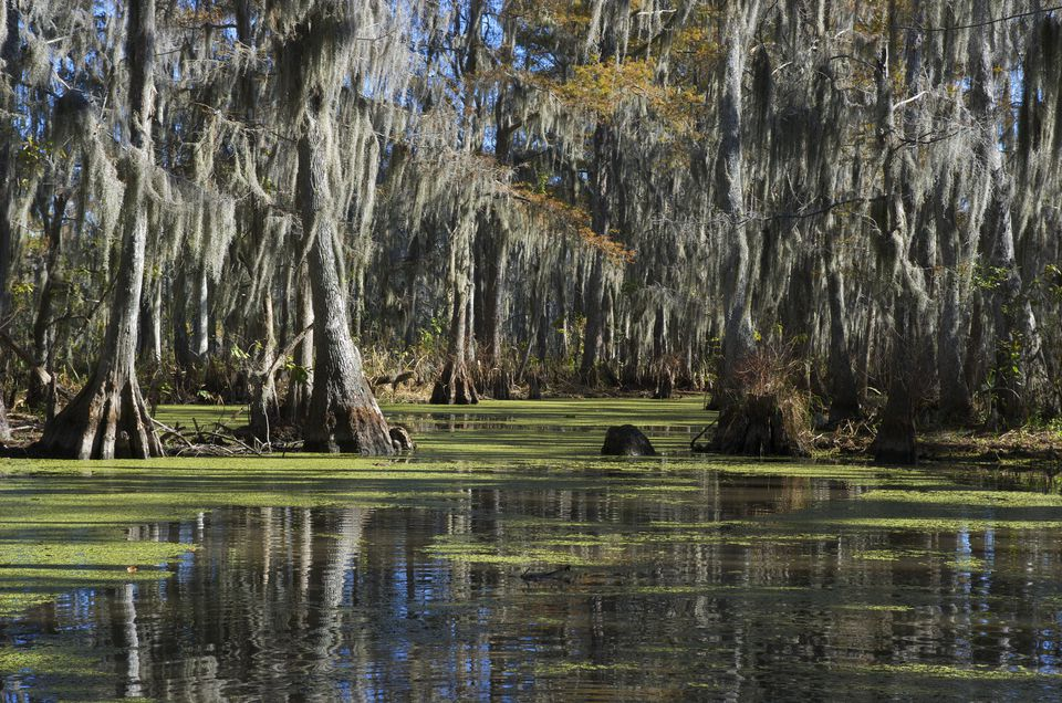 A swamp in Louisiana.