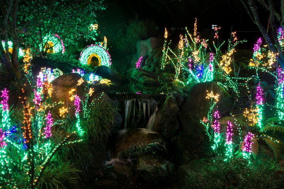 Tacoma Christmas Lights