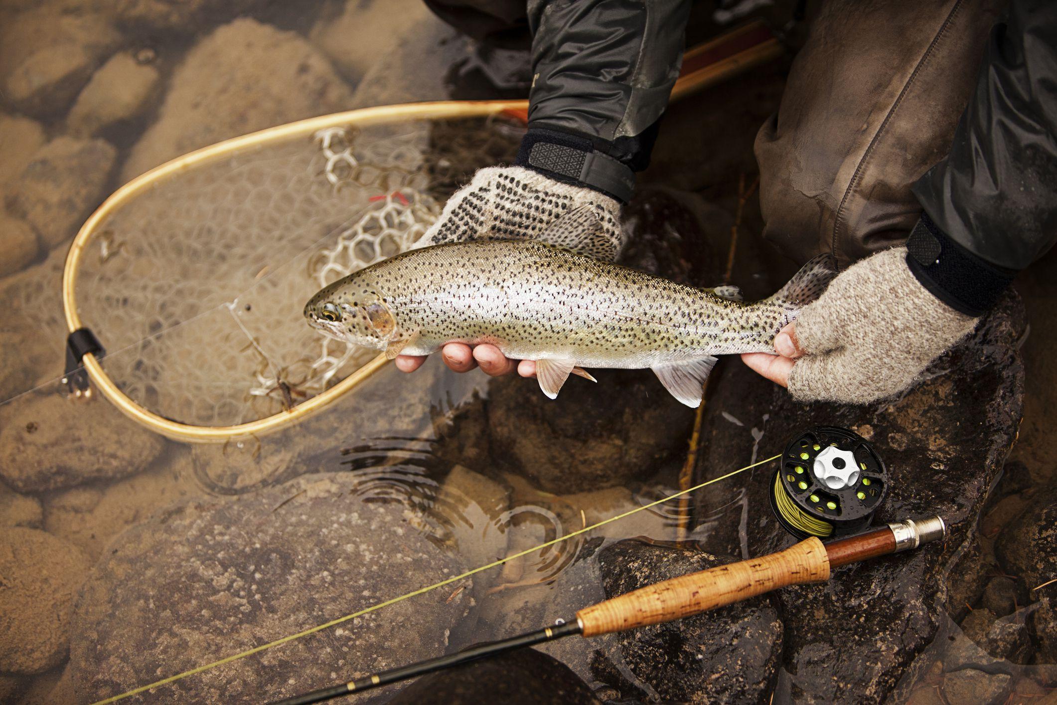 Fishing big sur carmel and san lorenzo rivers for Flying fish carmel