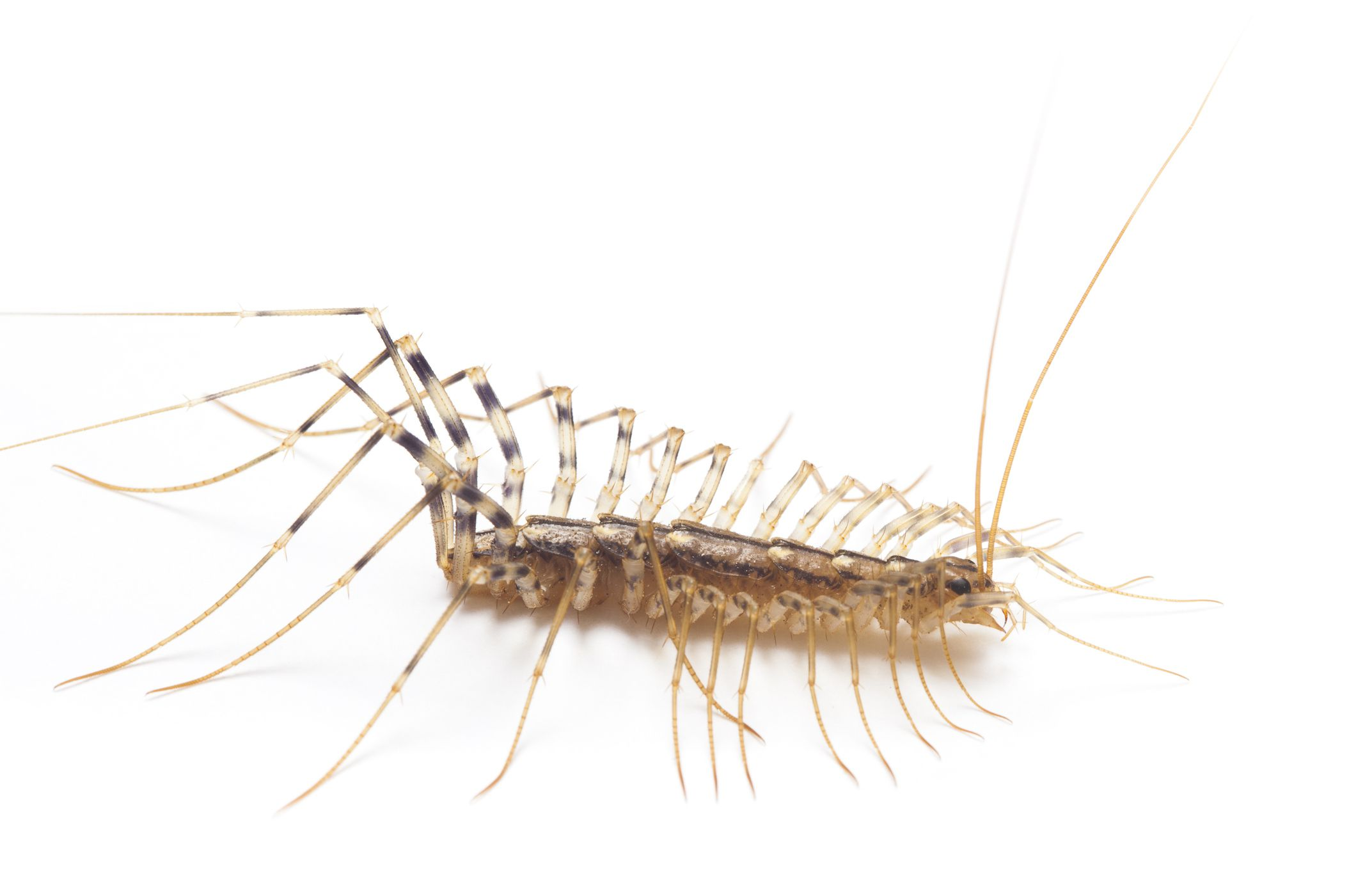 Centipede In House Meaning House Plan 2017