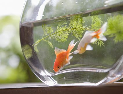 Here 39 s how to test water in your fish tank for Cloudy fish tank water in established tank