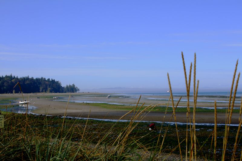 Birch Bay at Low Tide