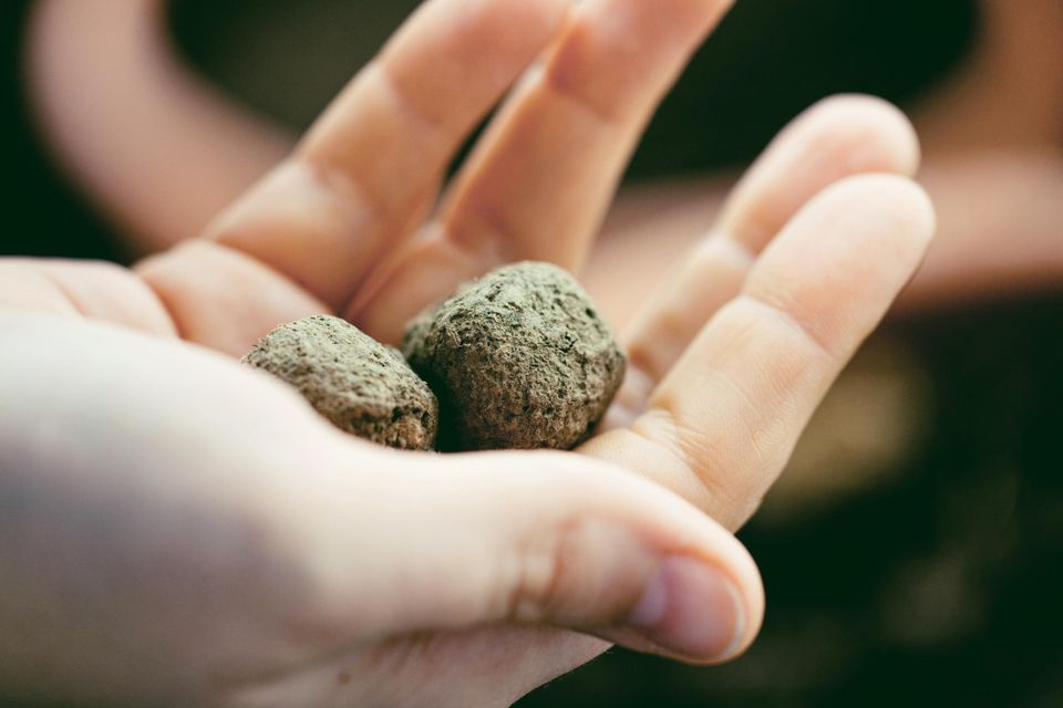 Close up of woman hand holding balls of seeds