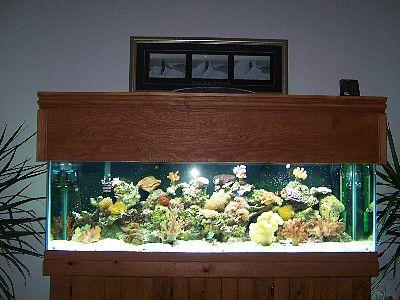 DIY Basic Aquarium Canopy Plan Chris Young