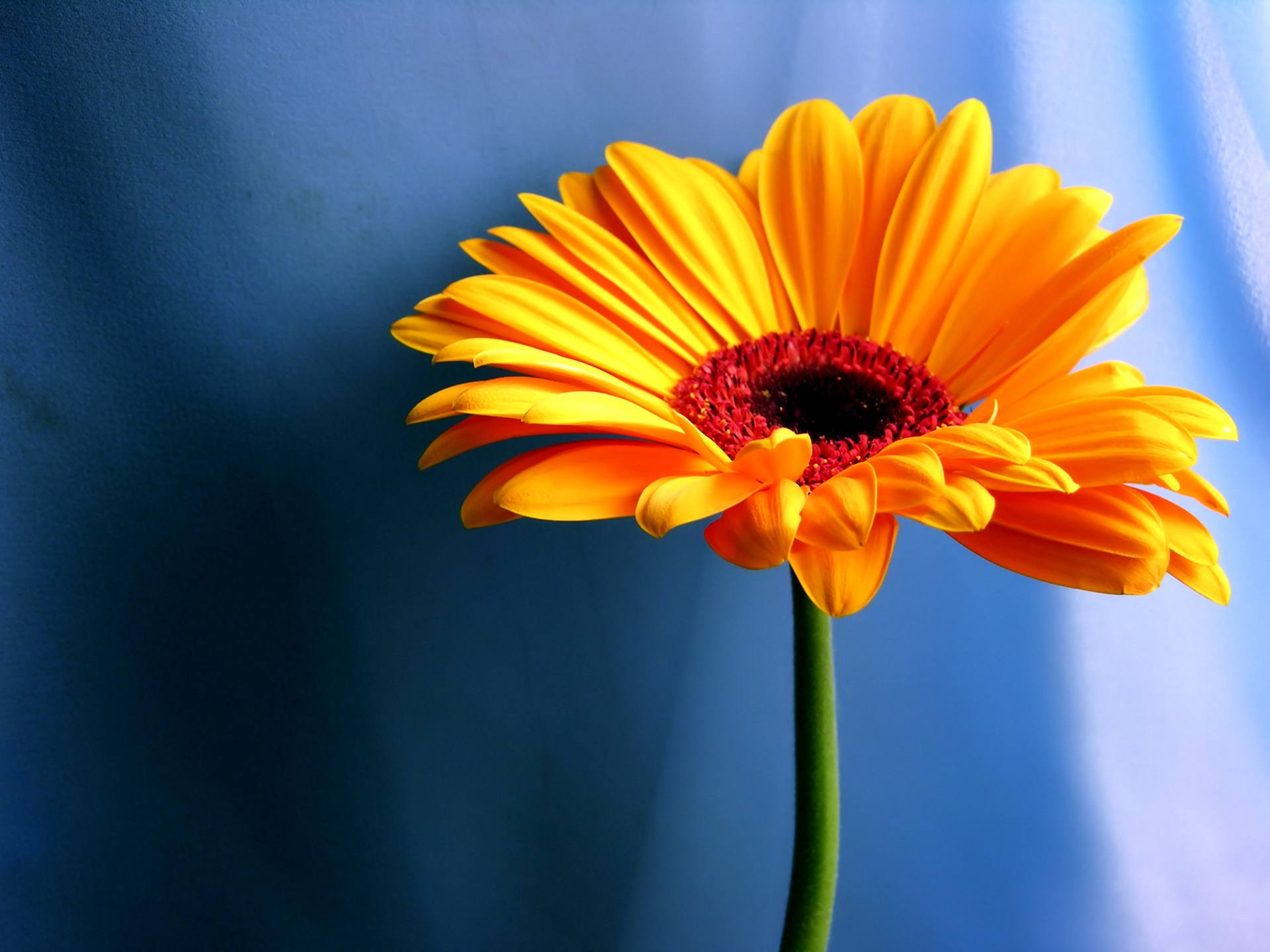 23 beautiful flower wallpapers izmirmasajfo Gallery