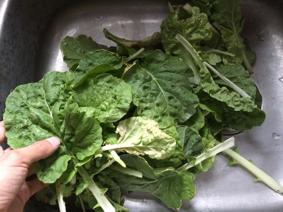washing leafy greens in sink
